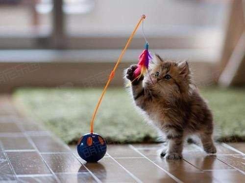 如何陪猫咪一起玩耍?